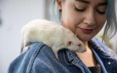 Darbuotojų savijauta rūpinasi neįprastu būdu: leidžia dirbti su šunimis, žiurkėmis ir tarantulais