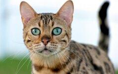 Tinkamiausia katės veislė pagal jūsų Zodiako ženklą