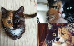"""""""Dviveidžių"""" kačių virusas Facebook: žmonės dalijasi išskirtinės išvaizdos kačių nuotraukomis"""