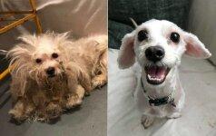 10 beglobių gyvūnų, kuriuos žmogiška meilė pakeitė neatpažįstamai