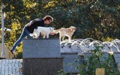 Šunų daugintojams ant kulnų lipa mokesčių inspektoriai
