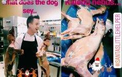 Žiaurūs virtuvės šefo pokštai liko nesuprasti: tai vadina pasityčiojimu iš gyvūnų