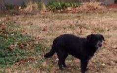 Benamis šuo rekordininkas: iš prieglaudos sugebėjo pabėgti 92 kartus