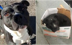 Jaudinantis įrašas internete: daug iškentėjęs šuo tebemiega kartoninėje dėžėje