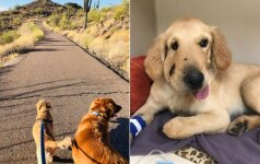 Tikras didvyris: šunelis išgelbėjo šeimininkę nuo barškuolės nuodų