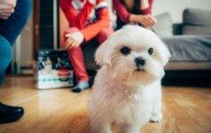 Sunkiai sergantis šunelis išmokė džiaugtis kiekviena minute, praleista kartu