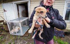 Miesto pakrašty išardė šunų fermą