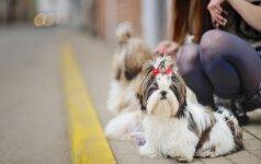 Šunys išjudina nuo sofų ir ištraukia iš interneto platybių