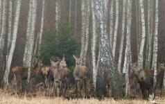 14 žvėrių patiesusių Šiaulių brakonierių byloje padėtas taškas