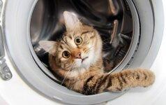 JUOKINGA: 25 nuotraukos, kuriose katės pagautos vagiliaujančios