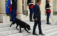 Macrono šuo filmuojant kameroms nusišlapino ant Eliziejaus rūmų židinio