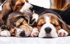 Esminiai dalykai, kurios verta žinoti visiems šuniukų šeimininkams