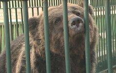 Iki šiol cirkuose naudoti gyvūnai greičiausiai pateks į zoologijos sodus, ne į gamtą