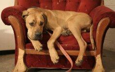 Kokius baldus rinktis, jei auginate šunį ar katę
