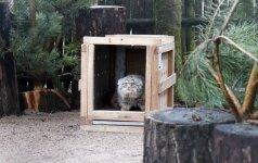 Zoologijos sodas pagausėjo: įkurdintas naujas itin retas gyvūnas