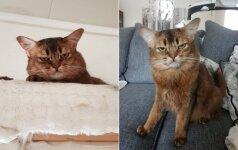 Joniškietės katė linksmina internautus: tokia pikta, kad net juokinga