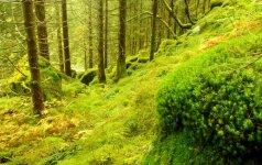 Mokiniai kviečiami kūrybiškai pažiūrėti į gamtos išteklių išsaugojimą