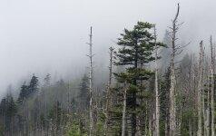 A.Gaižutis: miško hektaro kaina Lietuvoje gali siekti 60 tūkst. litų