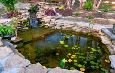 Skaitytojo patirtis: užmiesčio sodo kūdra, paskatinusi naujai leisti laisvalaikį