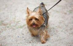Gyvūnų registracijos įstatymas – reikalingas, bet su daug klaustukų