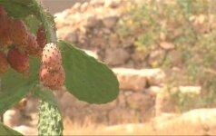 Jeruzalėje - 3 tūkst. metų senumo karaliaus Dovydo laikų artefaktų ekspozicija