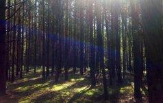 Lietuvoje bus įsteigta per šimtą naujų draustinių