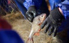 Sustabdė žuvies perdirbimo įmonę, kuriai trūko ne tik švaros, bet ir remonto