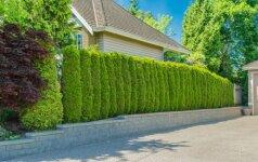 Kaip užsidengti nuo kaimynų ir sukurti savo sklypui privatumo