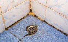 Kaip pašalinti pelėsį iš dušo kabinos