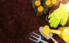 10 principų, kurių laikydamiesi apsaugosite savo augalus, piniginę ir aplinką
