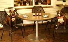 Keturkojų mylėtojai apsidžiaugs: restorane siūlo specialų meniu šunims