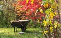 Rudens darbai sode: kaip pasiruošti žiemai?