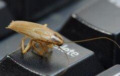 Ką daryti, jei į namus atkeliavo tarakonas?
