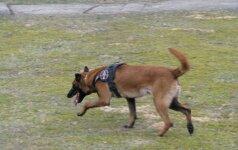 Galutinai ir neskundžiamai: pasieniečių tarnybinį šunį nušovęs Komskis - kaltas