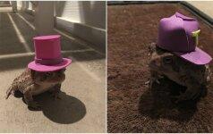 Išradingas vyras linksmina internautus: rupūžei kuria kepures