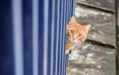 Sostinėje pastatys 90 namelių bešeimininkėms katėms