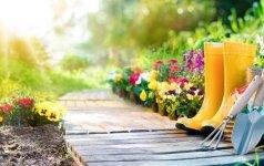 3 idėjos, kad jūsų sodas šiemet būtų kitoks