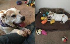 Nemylimo seno šuns kančios narve baigėsi: rado šeimininkus, kurie jį lepina