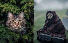 10 kačių, tapusių modeliais: pažiūrėkite, kokios jos gražios
