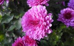14 gėlių, kurias reikia pasėti balandį