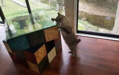 Darau pats: baldas katei – Rubiko kubas