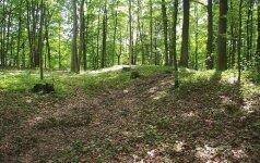 Kalno Grikštų piliakalnis