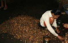 Indija lietuvės akimis: kaip gaminami anakardžiai