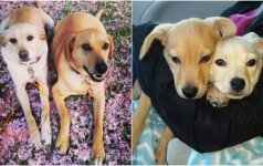 Moteris į prieglaudą užsuko tik apsidairyti: neišskiriami šuniukai pavergė jos širdį