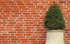 Namo apdaila: fasado klijavimas klinkerio plytelėmis