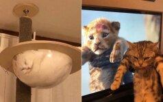 20 kurioziškų akimirkų: šios katės žino, kaip pakelti nuotaiką