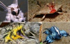 10 gyvūnų, kurie privers jus aiktelėti