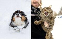 Augintiniai pirmą kartą pamato sniegą: reakcijos verčia kvatotis iki ašarų