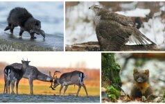 Gamtos dienoraštis: nelauktas, bet labai malonus susitikimas su miško gražuoliais