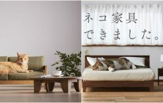 Pristatė baldus katėms: gyvūnams sunku atsispirti